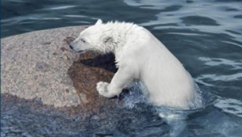 L'Artico brucia. Copernicus: incendi boschivi senza precedenti