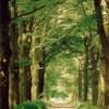 Crescono i boschi, sempre meno spazio per il mattone senza cervello