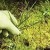 La Deep ecology di Hurit e Gannen, a 250 km più a nord di Takotna