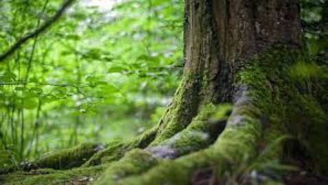 La Russia istituisce la riserva naturale Dvinsko-Pinezhsky: è grande come il Belgio