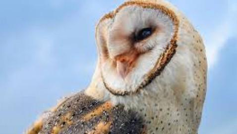 Il commercio di fauna selvatica causa un calo del 62% nell'abbondanza di specie
