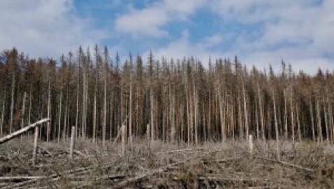 Danno ambientale, Linee Guida UE su prevenzione e risarcimento