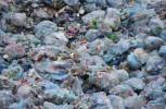 Traffico rifiuti, in Tunisia sequestrati 212 container italiani: ora devono tornare qui