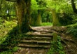 Foreste italiane e clima: il nuovo inventario nazionale forestale e dei serbatoi di carbonio