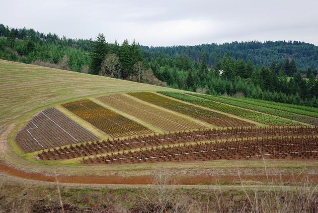 Se Il Comune Non Ha Stabilito Unu0027aliquota Specifica Per I Terreni Agricoli  Si Applicherà Quella Standard De 7,6 Per Mille. A Chiarirlo La Risoluzione  2/DF ...