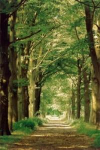 una-politica-economica-a-favore-delle-foreste-il-disegno-di-legge-lieberman-warner-foto2